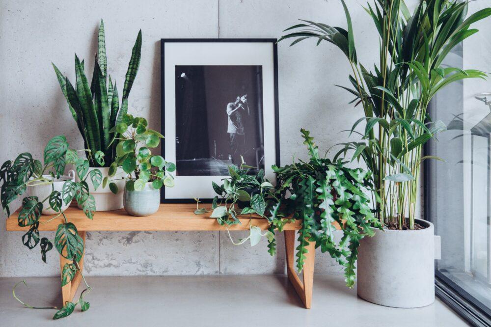 indoor planting tips from Plantlife Garden Design - indoor plants arranged on a bench